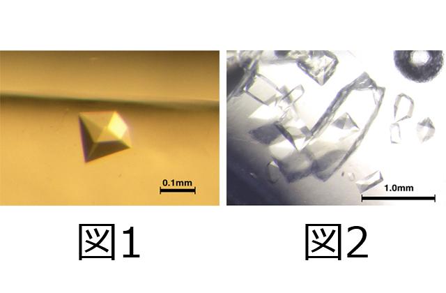 小型回収カプセルで持ち帰ったタンパク質結晶について(速報)