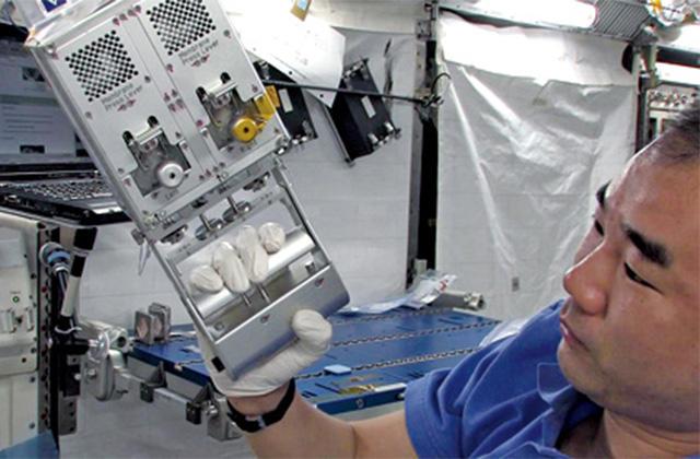 宇宙空間で引き起こされる骨吸収がメラトニンによって抑制